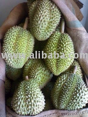 Durian (Mon Thong)  /  / Durio zibethinus