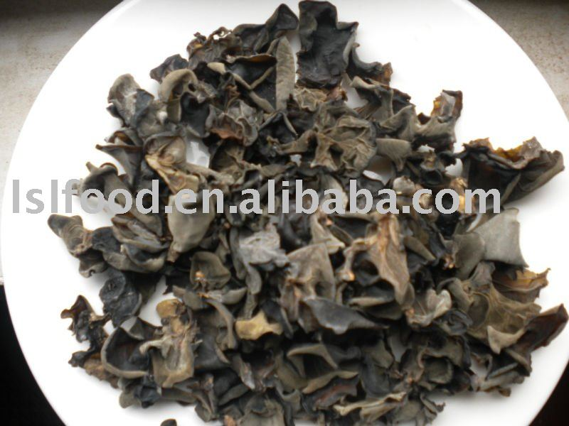 dried  log black fungus