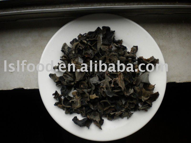 best  log black fungus