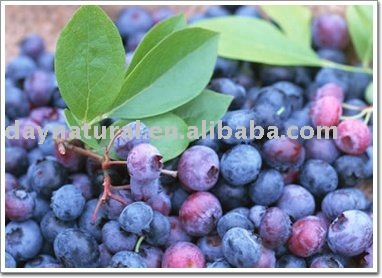 Blueberry Extract/Bilberry Extract