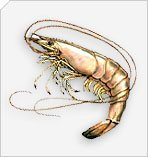 Sea Fish, Fish Products, Lobster, Jumbo Shrimp, Crab