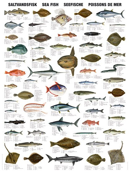 Sea Fish Types Products India Sea Fish Types Supplier