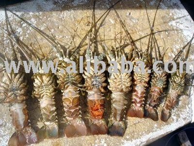Sell Shrimp from Vietnam
