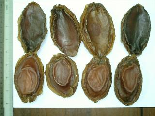 Dried Abalone