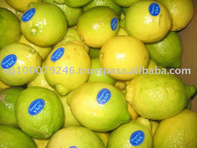 Fresh Egyptian Lemon products,Egypt Fresh Egyptian Lemon supplier800 x 600 jpeg 75kB