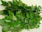 tamilnadu fresh curry leaves