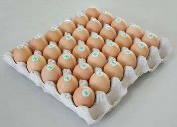 Fresh Poultry Chicken EGGS
