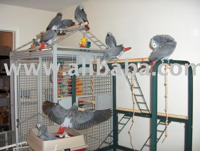 Parrots for sale- Various Species Available-Tamed, Healthy, Hand Raised