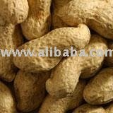 Groundnut In Shell