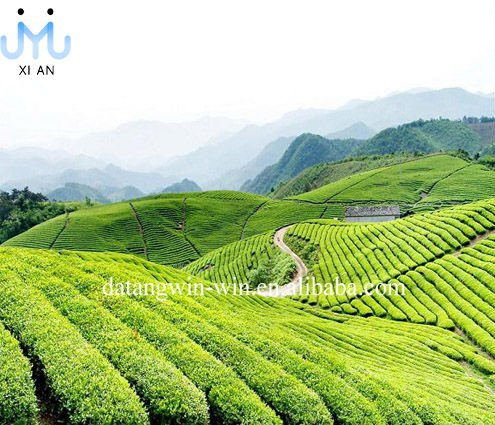 Han Zhong organic Green Tea