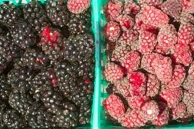 fresh Loganberry for sale products,Cameroon fresh Loganberry for ...