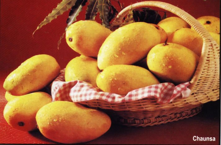 best quality Varities of mangoes