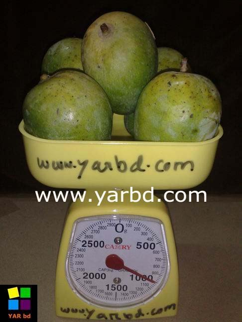 fresh MANGO from bangladesh (sweeter then ever)