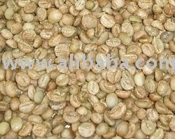 Kopi Luwak Robusta Sumatra green from wild