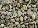 roasted and green arabica coffee beans