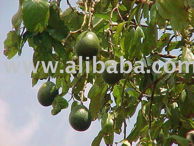 Avocados and other fresh fruits on sale