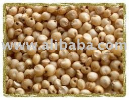 Sorghum Grains