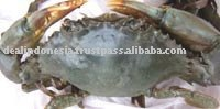 Live mud crab (scylla serrata)