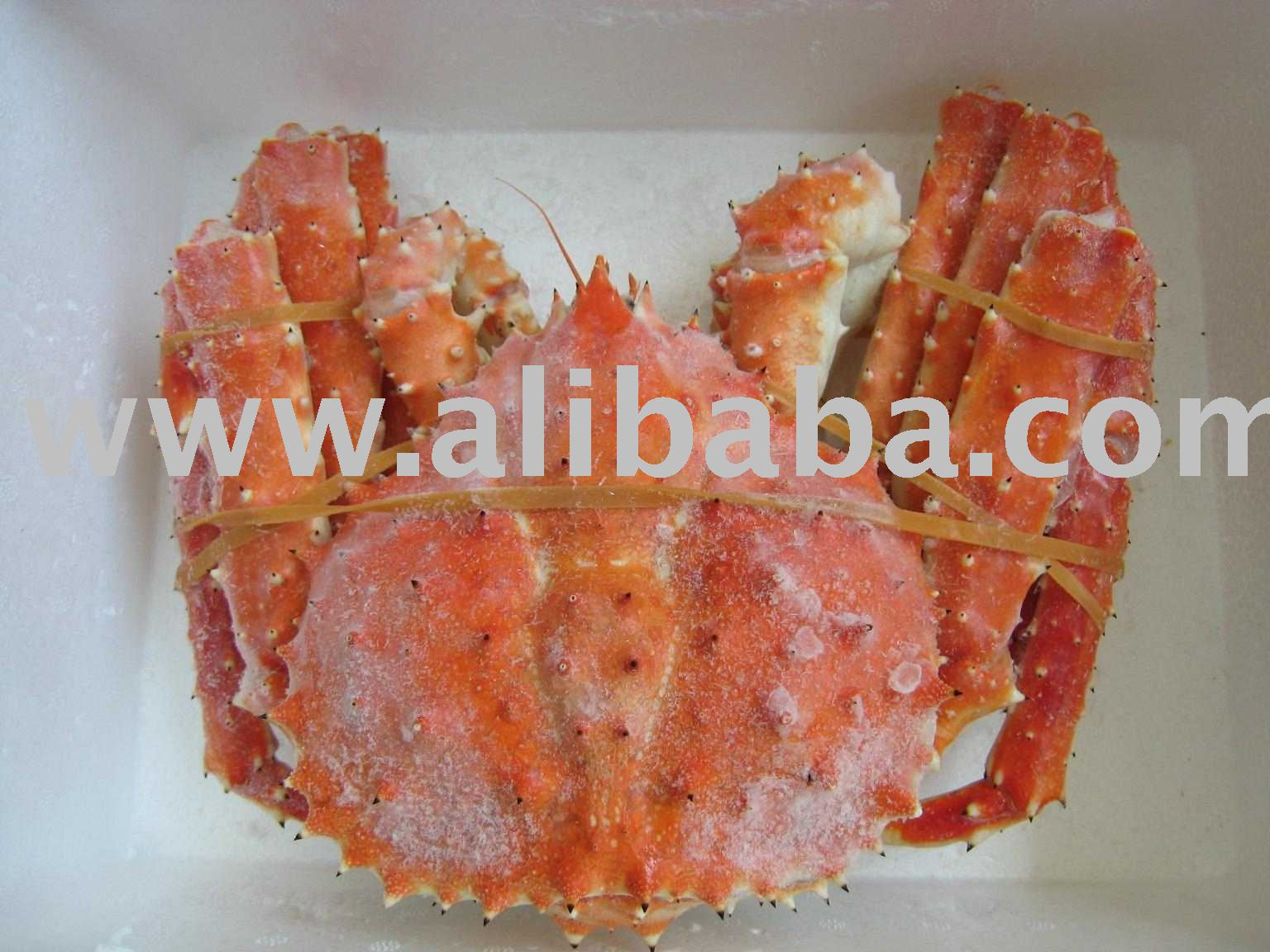 WHOLE  RED KING CRAB