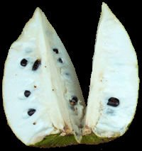 Soursop seeds and fruits