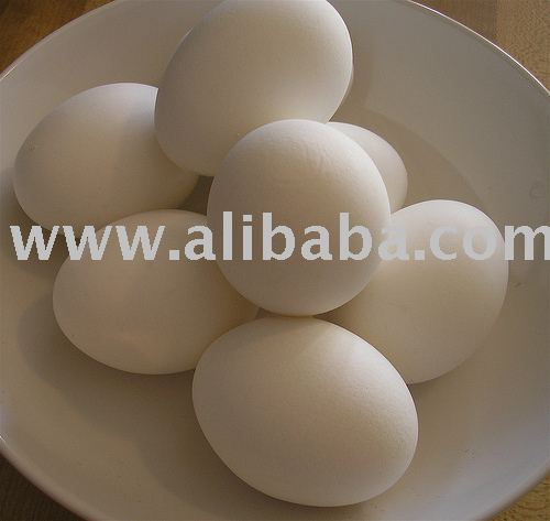 Hatched chicken fresh Eggs for domestic and exports supply