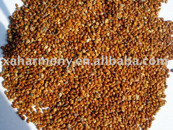 Red Broomcorn Millet for bird feed
