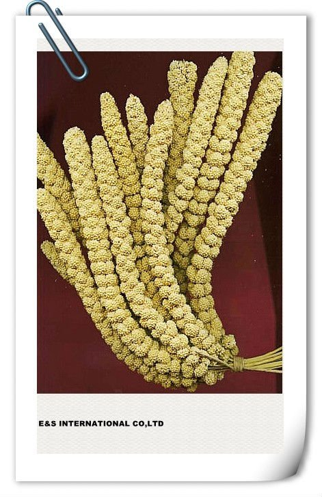 Bird Feed Millet Spray