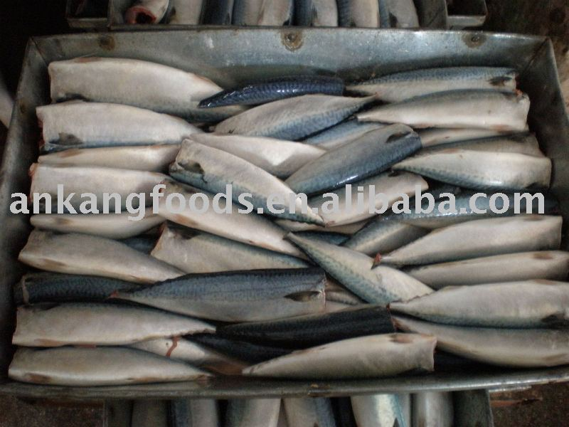 frozen mackerel h/g (saba)