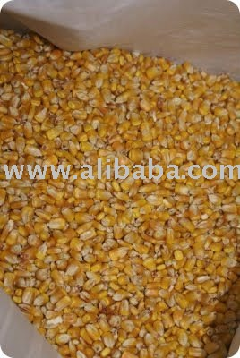 100% Dried Corn For Sale