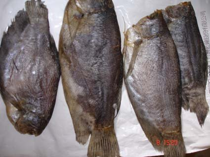 Dried Salted Gourami Fish