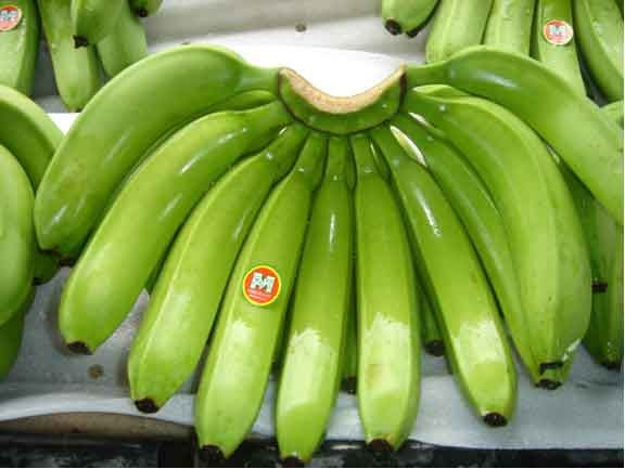 fresh premium quality bananas