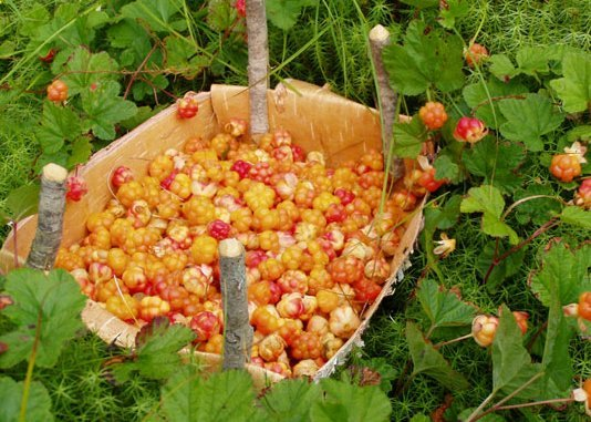 Frozen Cloudberry, Organic