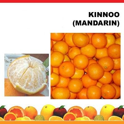 Citrus Fruit Mandarin (kino)