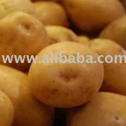 FRESH POTATO from GREEN country BANGLADESH