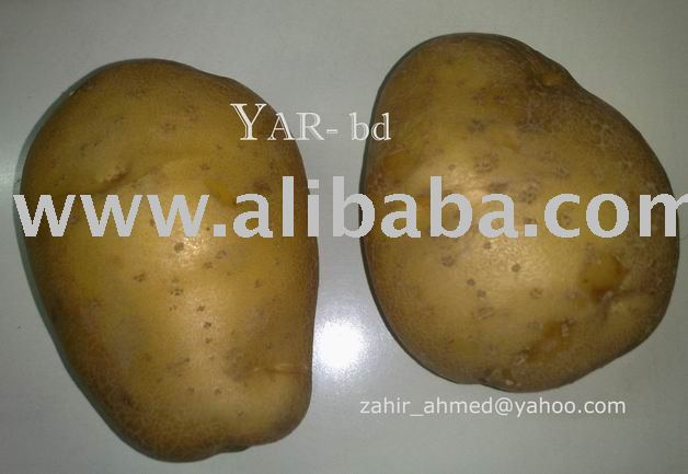 fresh big POTATO (Genola) from bangladesh