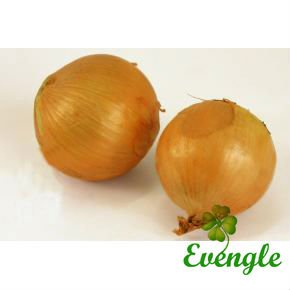Fresh Onion/Yellow Onion/Top Quality Organic