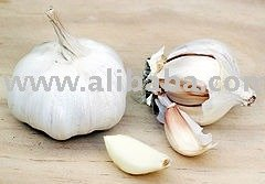 distributor white onion
