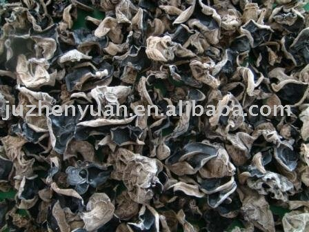 Log Black Fungus