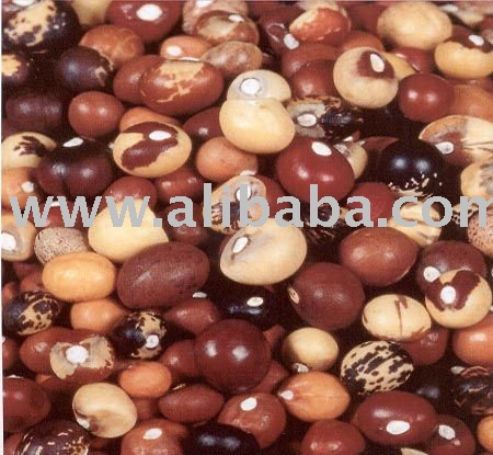 Quality Bambara groundnut
