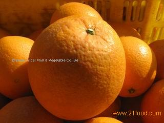 Fresh and sweet navel orange