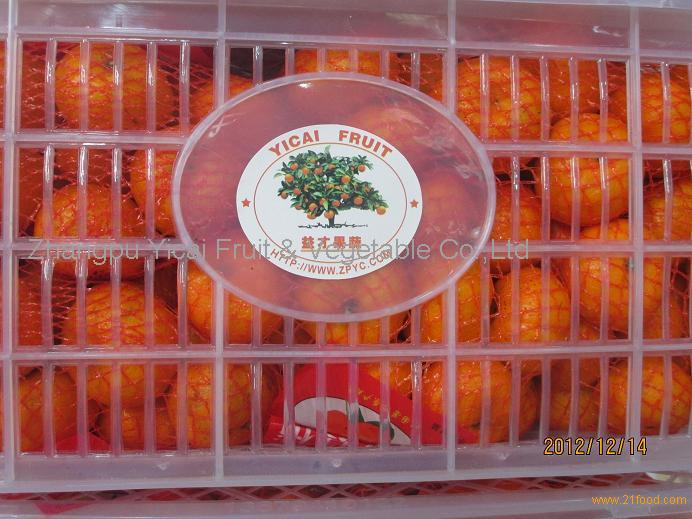 Sweet Nanfeng(baby) orange