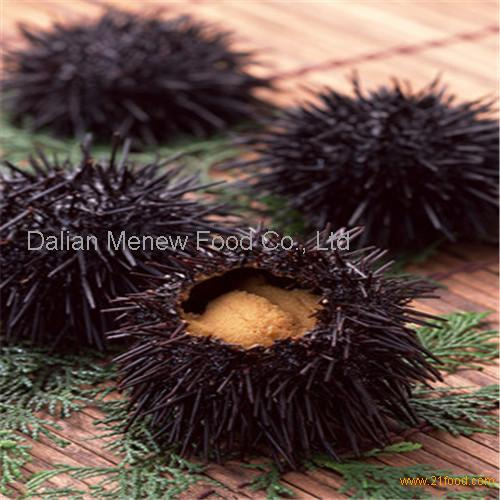 Fresh ice sea urchin made in china