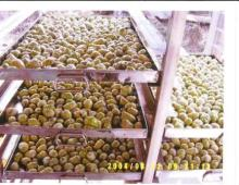 NONI FRESH FRUIT