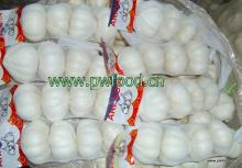 New Fresh Garlic packed in net bags