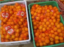 Nanfeng orange32