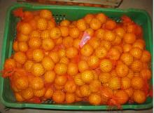 Nanfeng orange34