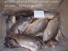 frozen black tilapia whole round(W/R)