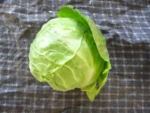 Chinese round cabbage004