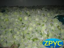Fresh beijing cabbage