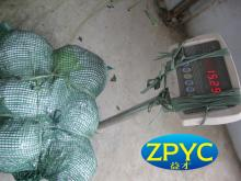 Chinese round cabbage 20kg mesh bag